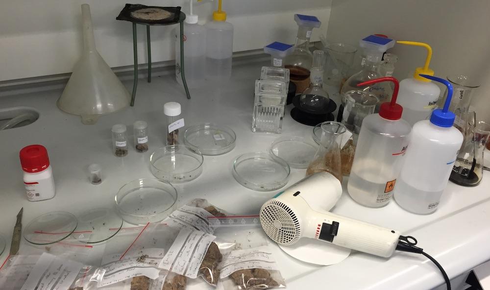 Laben til prosjektet Saving oseberg. Foto: Signy Norendal