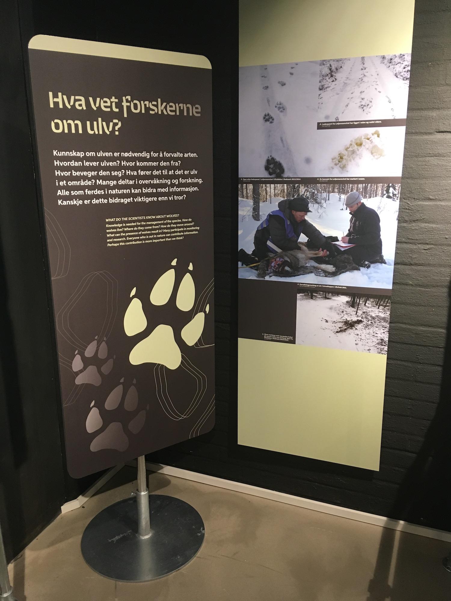 FORSKNING: Hva sier forskningen om ulv? FOTO: Elise Lund