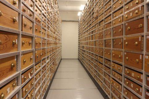 SKATTER: I museenes samlinger skjuler det seg uante skatter for fremtidens forskere. Her fra et av magasinene til Naturhistorisk museum, UiO, hvor en del av de totalt 6,2 millioner objektene oppbevares.FOTO: privat