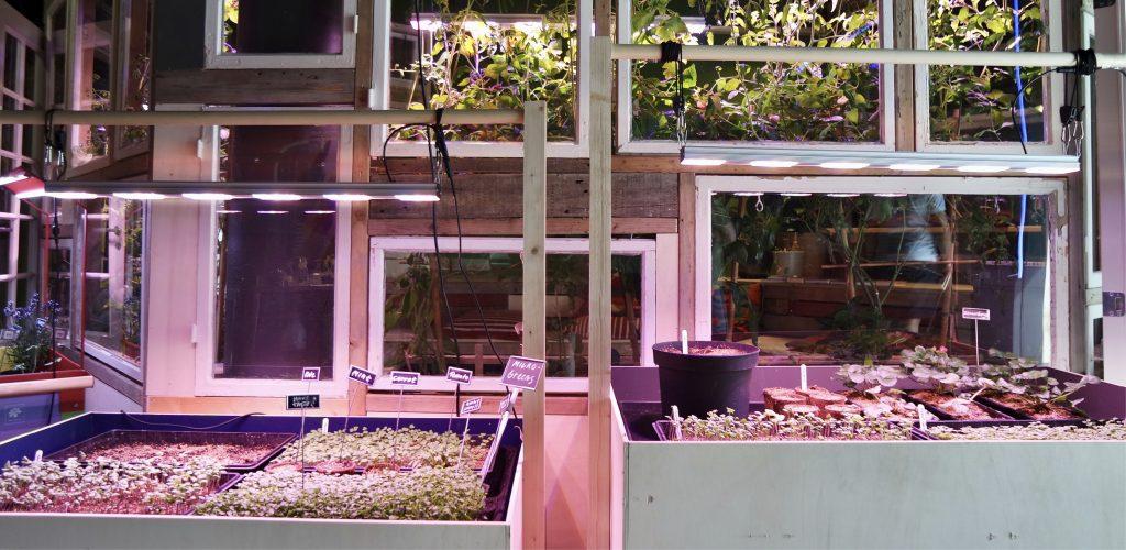 SPISELIG: I Klimalab på Nobels fredssenter kan du smake utstillingen. Spirer og urter vokser i det hjemmesnekrede veksthuset av resirkulerte vinduer. Foto: Elise Matilde Lund