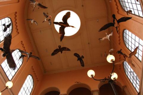 HYBRID: Naturhistorisk Museum i Bergen er landets eldste museumsbygning, og sto ferdig i 1865. Det som har gjenåpnet er en vellykket hybrid av gammel skjønnhet og moderne formidling. Foto: Per A.D. Jynge