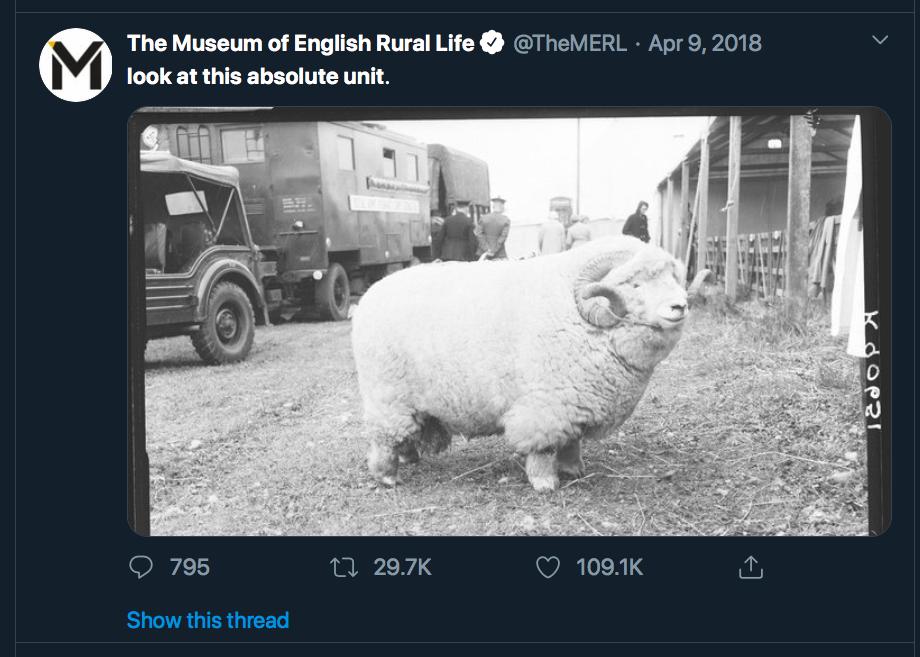 """Skjermbilde av twitterpost fra TheMERL, med foto av stor sau og teksten """"Look at this absolute unit"""""""