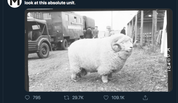 Absolute_unitMERL-570x330.png