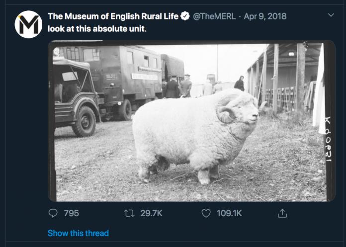 Skjermbilde av twitterpost fra TheMERL, med foto av stor sau og teksten