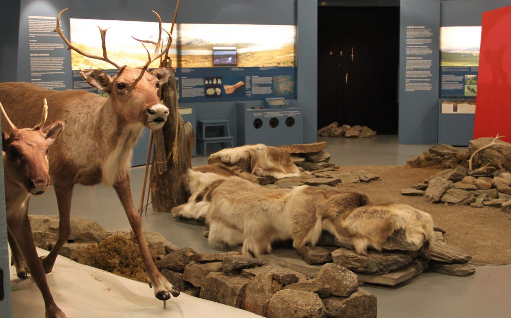 Utsnitt frå utstilling med bl.a. reinsdyr